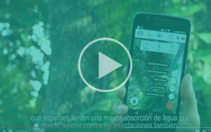 Screenshot Video Arbol IoT player